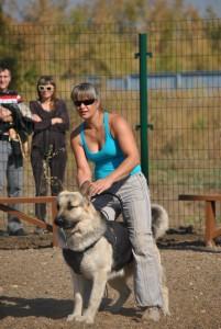 Дрессировка собак в Оренбурге