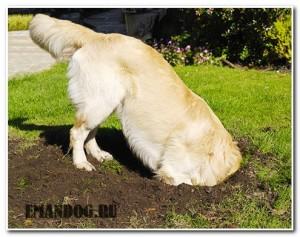 проблема собака роет ямы